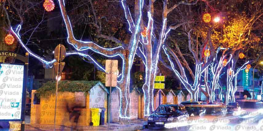 Manguera de luz perfilando troncos de arboles